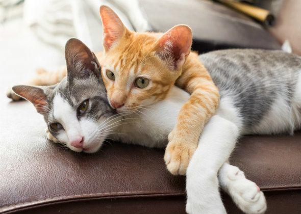 5 Miti comuni di comportamento del gatto smascherato
