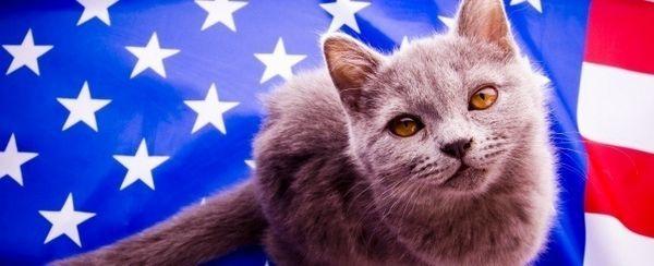 52 Nomi del gatto patriottici che renderanno l`America orgogliosi
