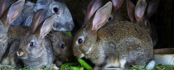 Problemi di comportamento in conigli
