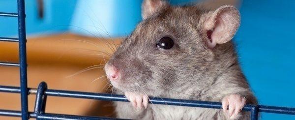 La cura per il vostro topo