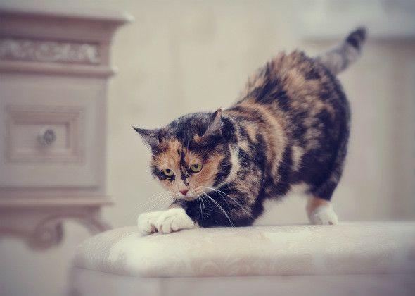 Miti comportamento del gatto: 5 più decodificati