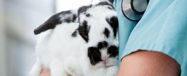 Renale cronica (rene) fallimento in piccoli mammiferi