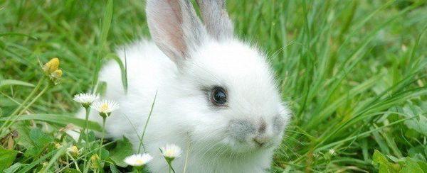 Cura del coniglio Estate