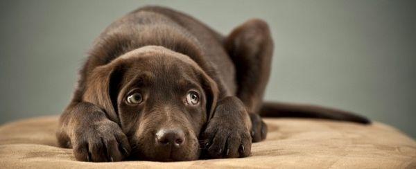 La cura degli occhi nei cuccioli