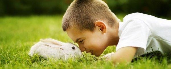 Divertirsi con il tuo coniglio