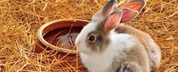 Giocattoli fatti in casa il coniglio ameranno