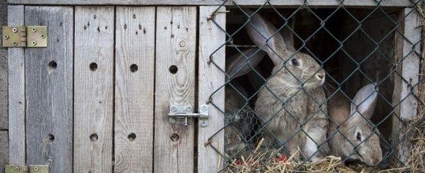 Come costruire una conigliera