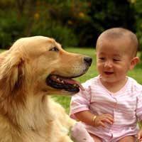 Preparare il vostro cane per il vostro neonato
