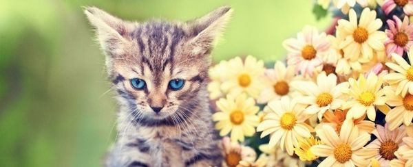 Nomi del gatto a molla di ispirazione