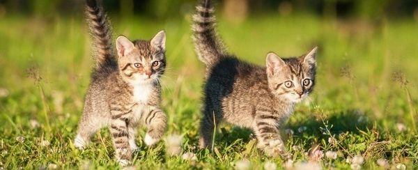 Nomi del gatto estate di ispirazione