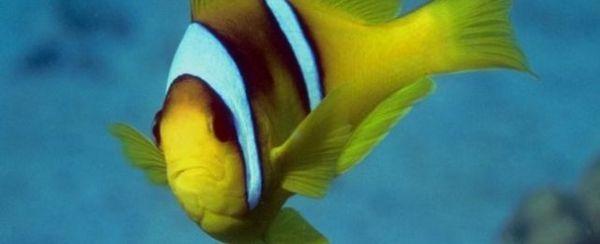 L`anatomia esterna di un pesce