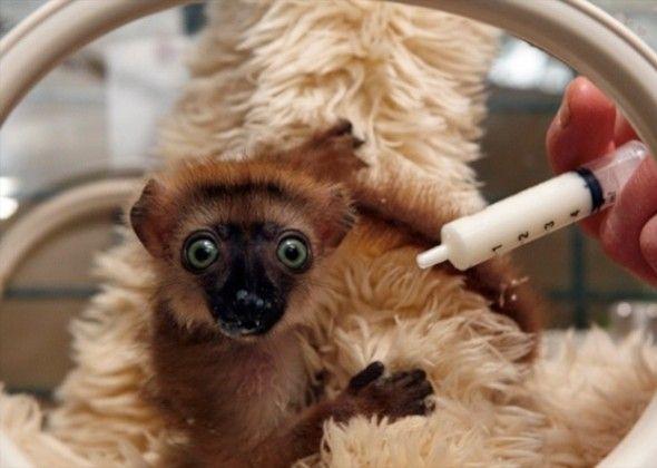 10 Più teneri cuccioli di Vetstreet del 2013