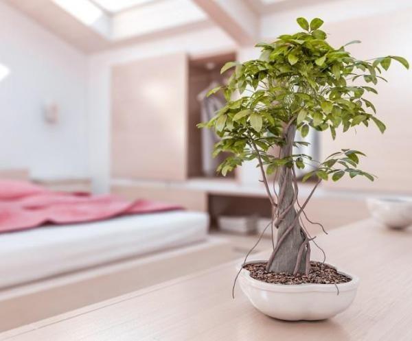 Quali piante migliorare la feng shui della mia casa?